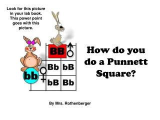 How do you do a Punnett Square