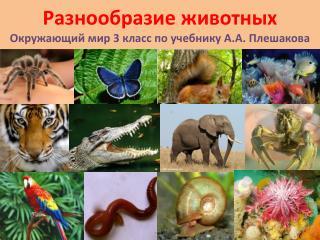Разнообразие животных Окружающий мир 3 класс по учебнику А.А. Плешакова