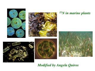 15 N in marine plants
