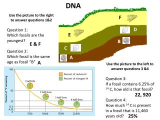 Use the picture to the right to answer questions 1&2 Question 1: Which fossils are the youngest?
