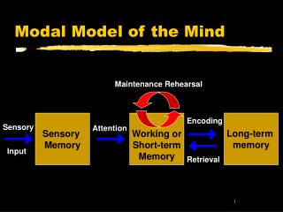 Modal Model of the Mind