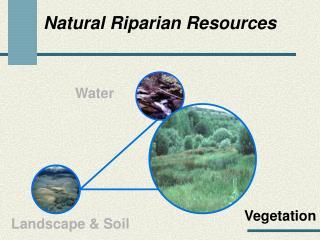 Natural Riparian Resources