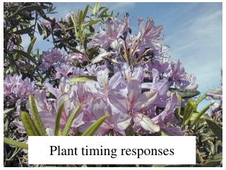 Plant timing responses