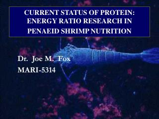 CURRENT STATUS OF PROTEIN: ENERGY RATIO RESEARCH IN PENAEID SHRIMP NUTRITION