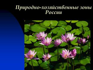 Природно-хозяйственные зоны России
