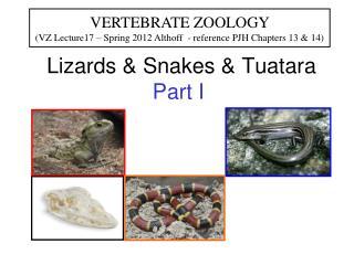 Lizards & Snakes & Tuatara  Part I