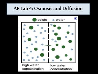 AP Lab 4: Osmosis and Diffusion