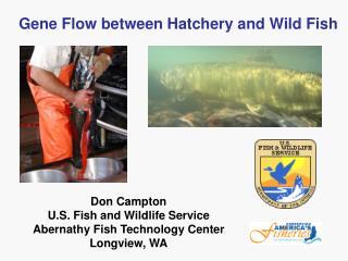 Gene Flow between Hatchery and Wild Fish