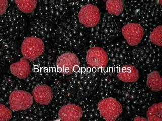 Bramble Opportunities