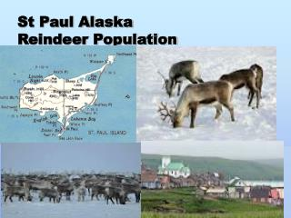 St Paul Alaska Reindeer Population