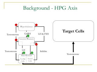 Background - HPG Axis
