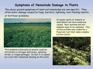 Symptoms of Nematode Damage to Plants