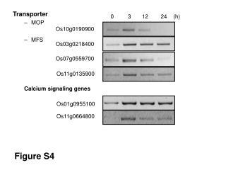 Transporter MOP MFS Calcium signaling genes