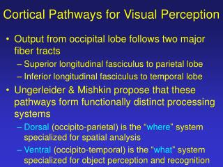 Cortical Pathways for Visual Perception