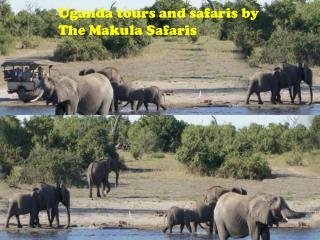 Uganda tours and safaris by The Makula Safaris