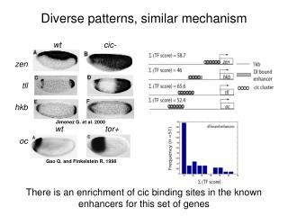 Diverse patterns, similar mechanism