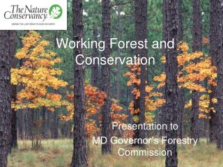 Working Forest and Conservation