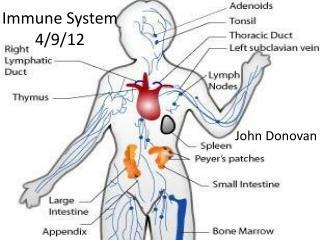 Immune  System 4/9/12