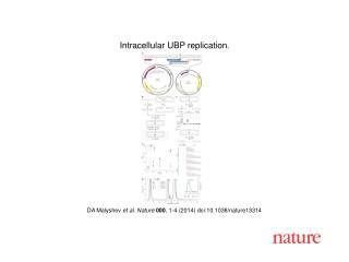 DA Malyshev  et al. Nature  000 , 1-4 (2014) doi:10.1038/nature13314
