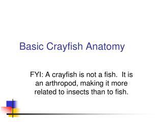 Basic Crayfish Anatomy