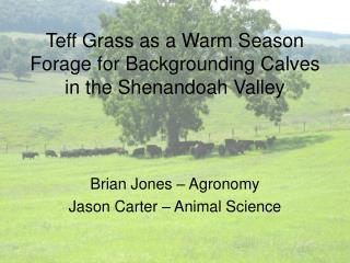Teff Grass as a Warm Season Forage for Backgrounding Calves in the Shenandoah Valley