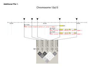 Chromosome 12q13