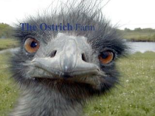 The Ostrich Farm