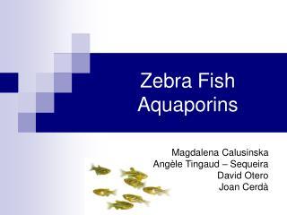Zebra Fish Aquaporins