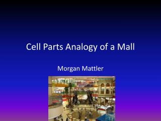 Cell Parts Analogy of a Mall