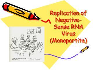 Replication of Negative-Sense RNA Virus (Monopartite)