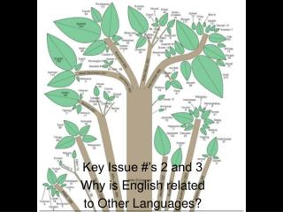 Key Issue #'s 2 and 3 Why is English related  to Other Languages?