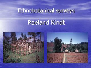 Ethnobotanical surveys
