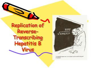 Replication of Reverse-Transcribing Hepatitis B Virus