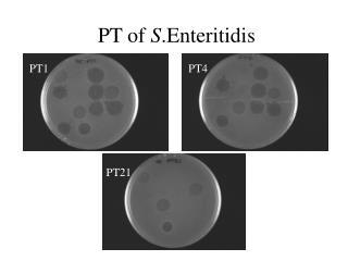 PT of  S .Enteritidis