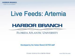 Live Feeds: Artemia