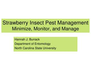 Strawberry Insect Pest Management Minimize, Monitor, and Manage