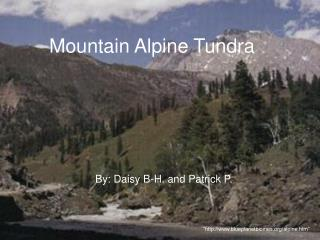 Mountain Alpine Tundra