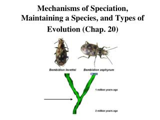 Mechanisms of Speciation, Maintaining a Species, and Types of Evolution Chap. 20