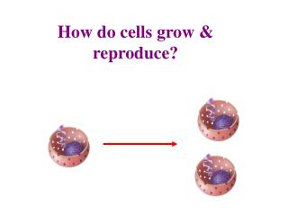 How do cells grow & reproduce?