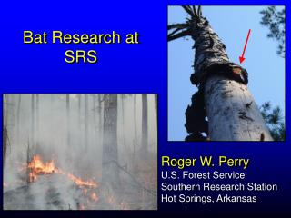 Roger W. Perry  U.S. Forest Service Southern Research Station Hot Springs, Arkansas
