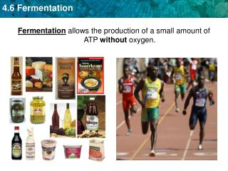 Fermentation allows the production of a small amount of ATP  without  oxygen.