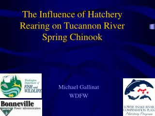 The Influence of Hatchery Rearing on Tucannon River Spring Chinook