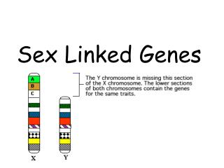 Sex Linked Genes