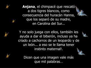 LOS ANIMALES  MUCHAS VECES NOS DAN EJEMPLO DE SENTIMIENTOS Y TERNURA...