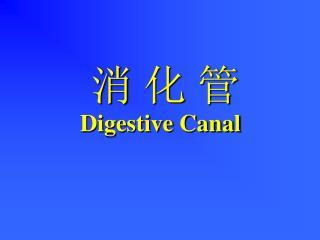 消 化 管