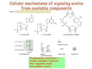 Cellular mechanisms of signaling evolve from available components
