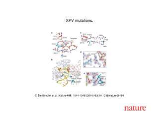C Biert ü mpfel  et al. Nature 465 , 1044-1048 (2010) doi:10.1038/nature09196