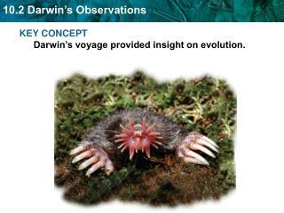 KEY CONCEPT  Darwin's voyage provided insight on evolution.