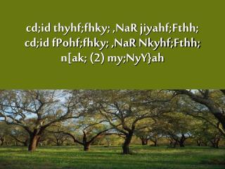 cd;id thyhf;fhky; ,NaR jiyahf;Fthh; cd;id fPohf;fhky; ,NaR Nkyhf;Fthh; n[ak; (2) my;NyY}ah