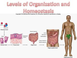 Levels of Organization and Homeostasis
